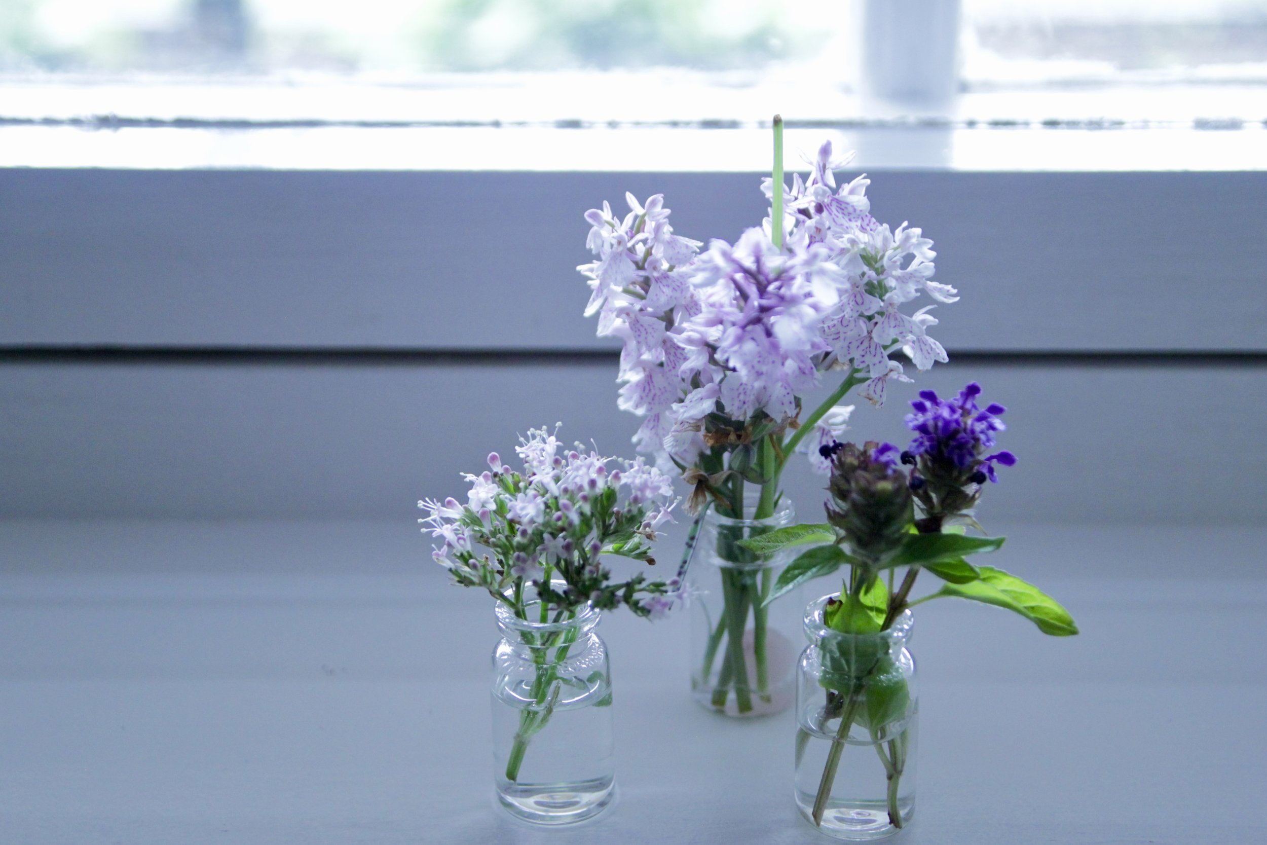 Yesterday's gathering. From left: Valerian flower, Spotted Orchid & Prunella Vulgaris (Self Heal)