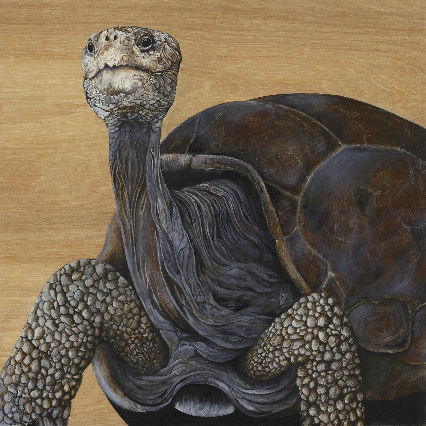 Lonesome George: Galapagos Turtle