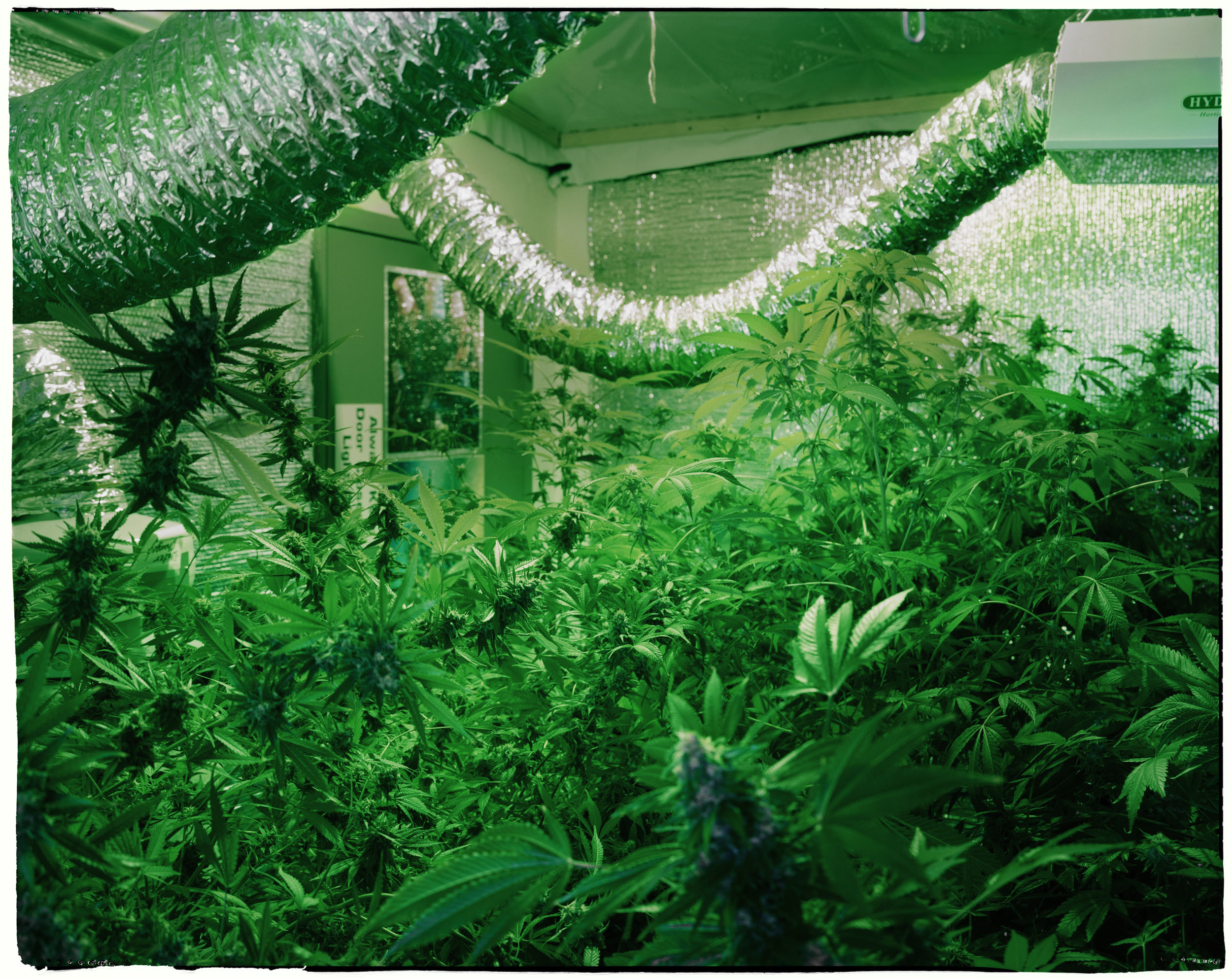 Medical Marijuana Grow Room - Denver, CO