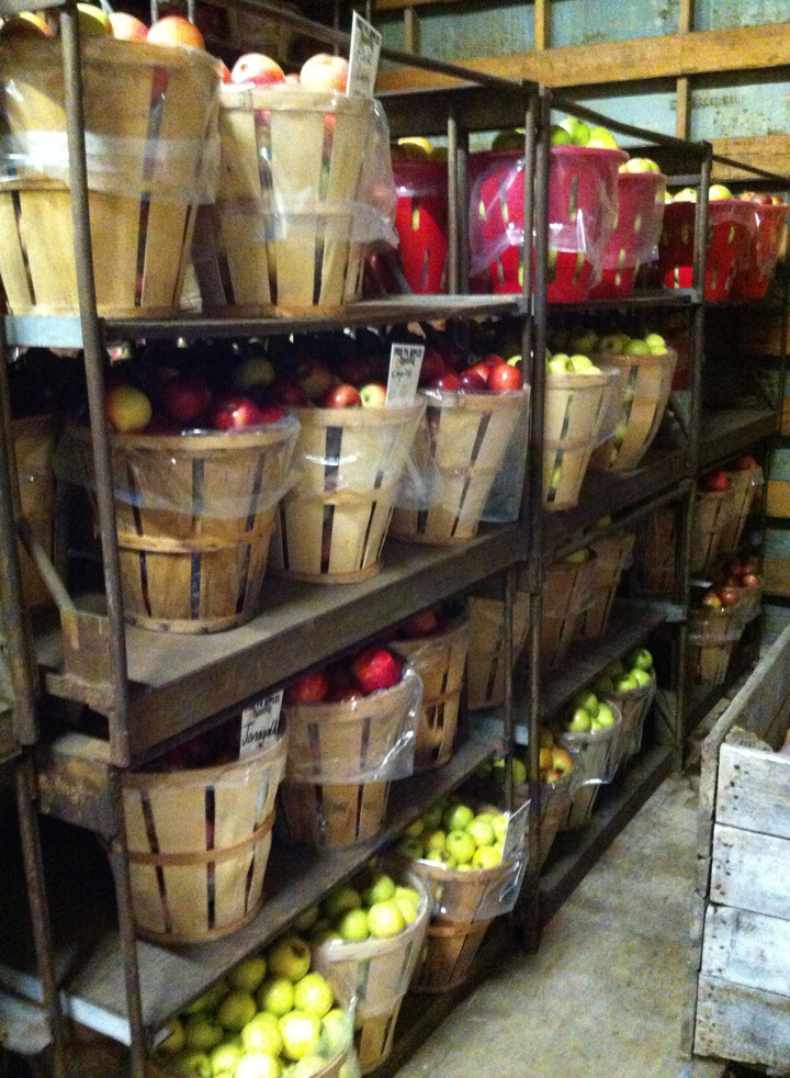 Apples in the cooler.jpg
