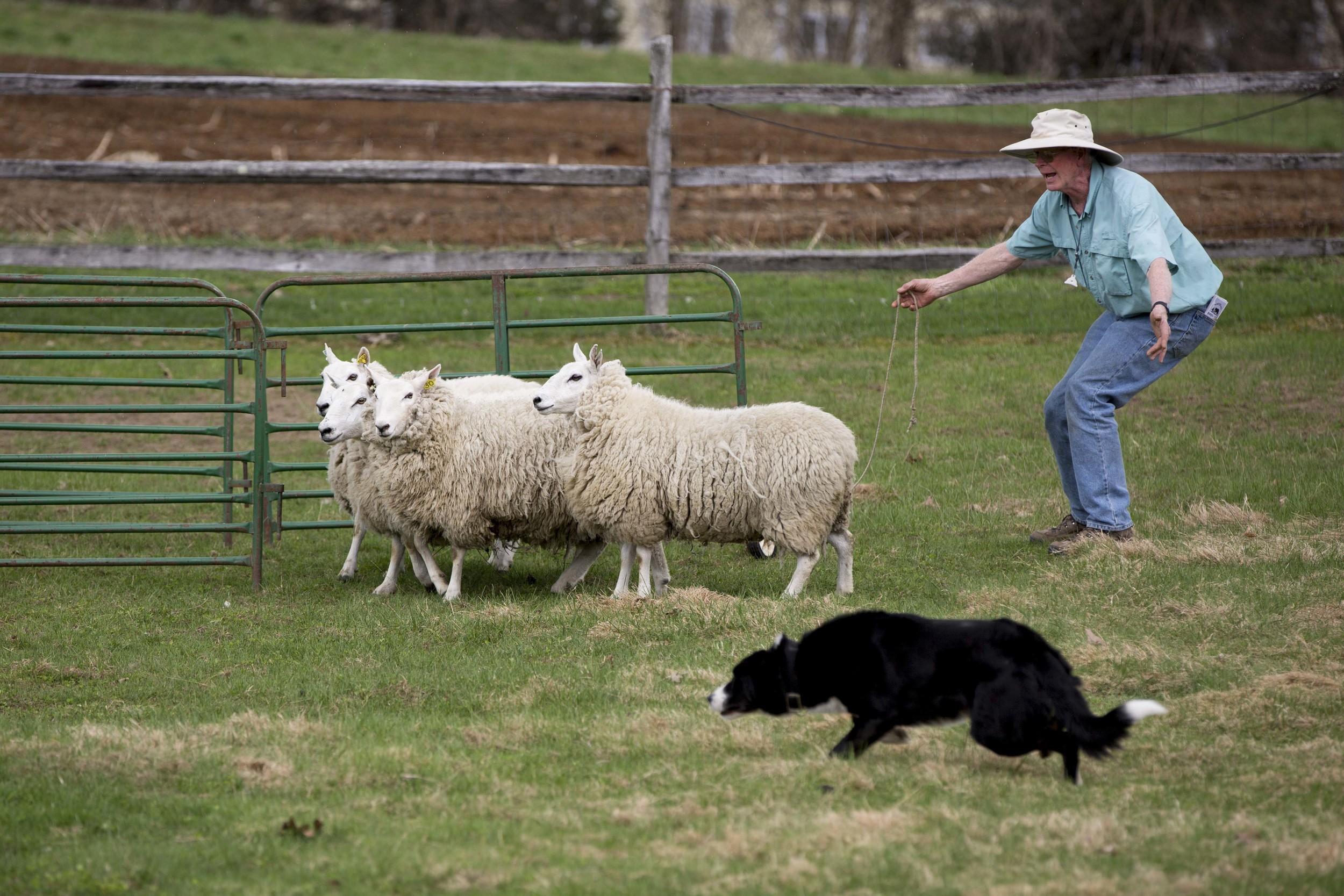 20150503-vn-sheep-ss-105.JPG
