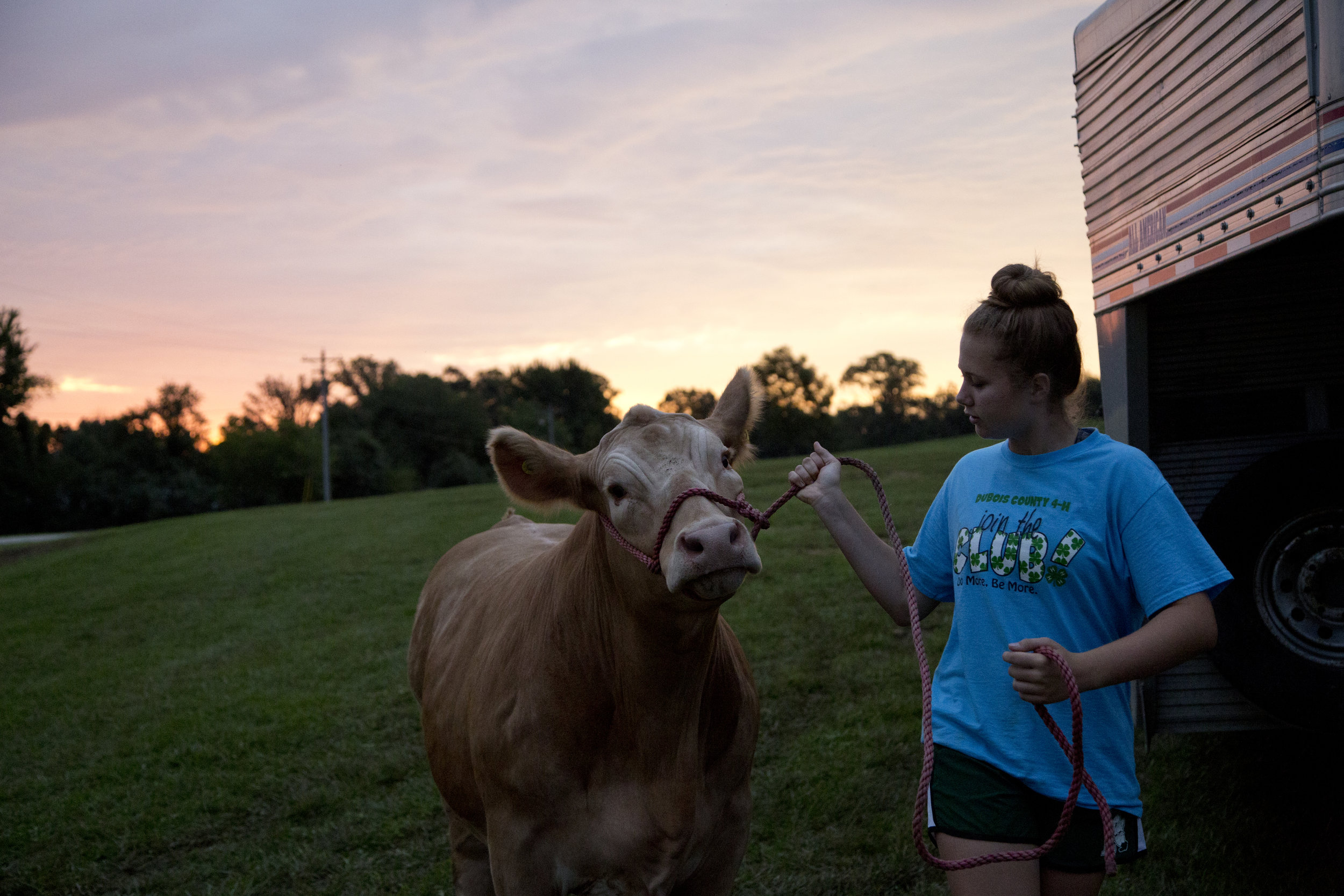 Allyson Werner of Ferdinand, 14, guided her steer from the outdoor pen at the Dubois County 4-H Fairgrounds in Bretzville on Wednesday morning.