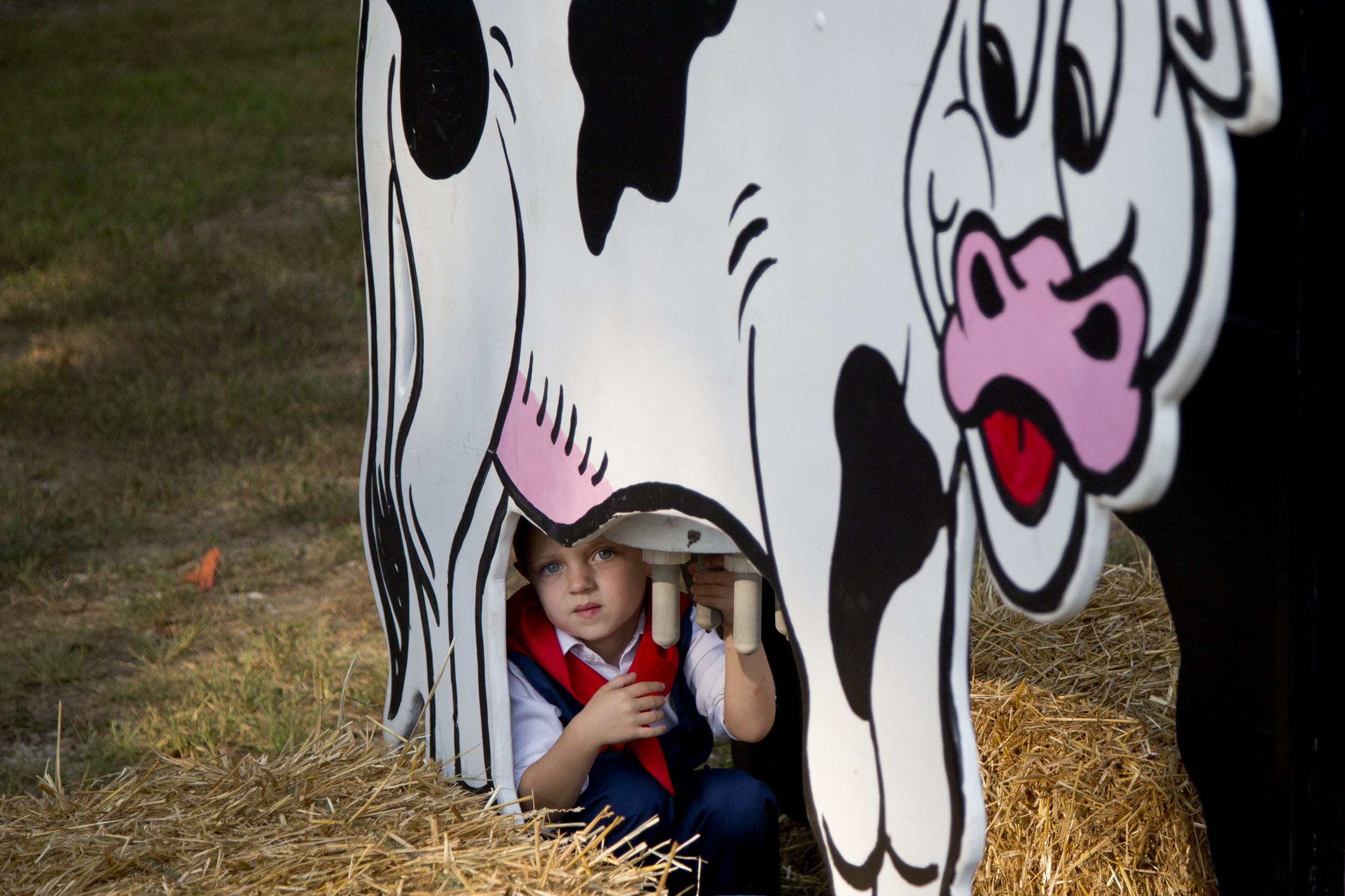Little Mister contestant William Flamion of Holland, 3, sat under a cow-milking display before the start of the Little Miss and Mister contest during the Holland Community Fest in Holland on Friday.