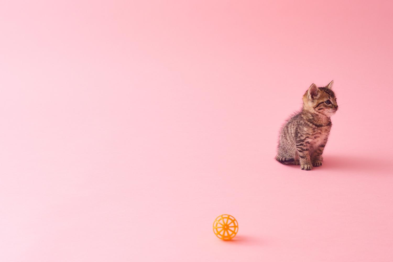 Catsonova and Maple_067 1.jpg