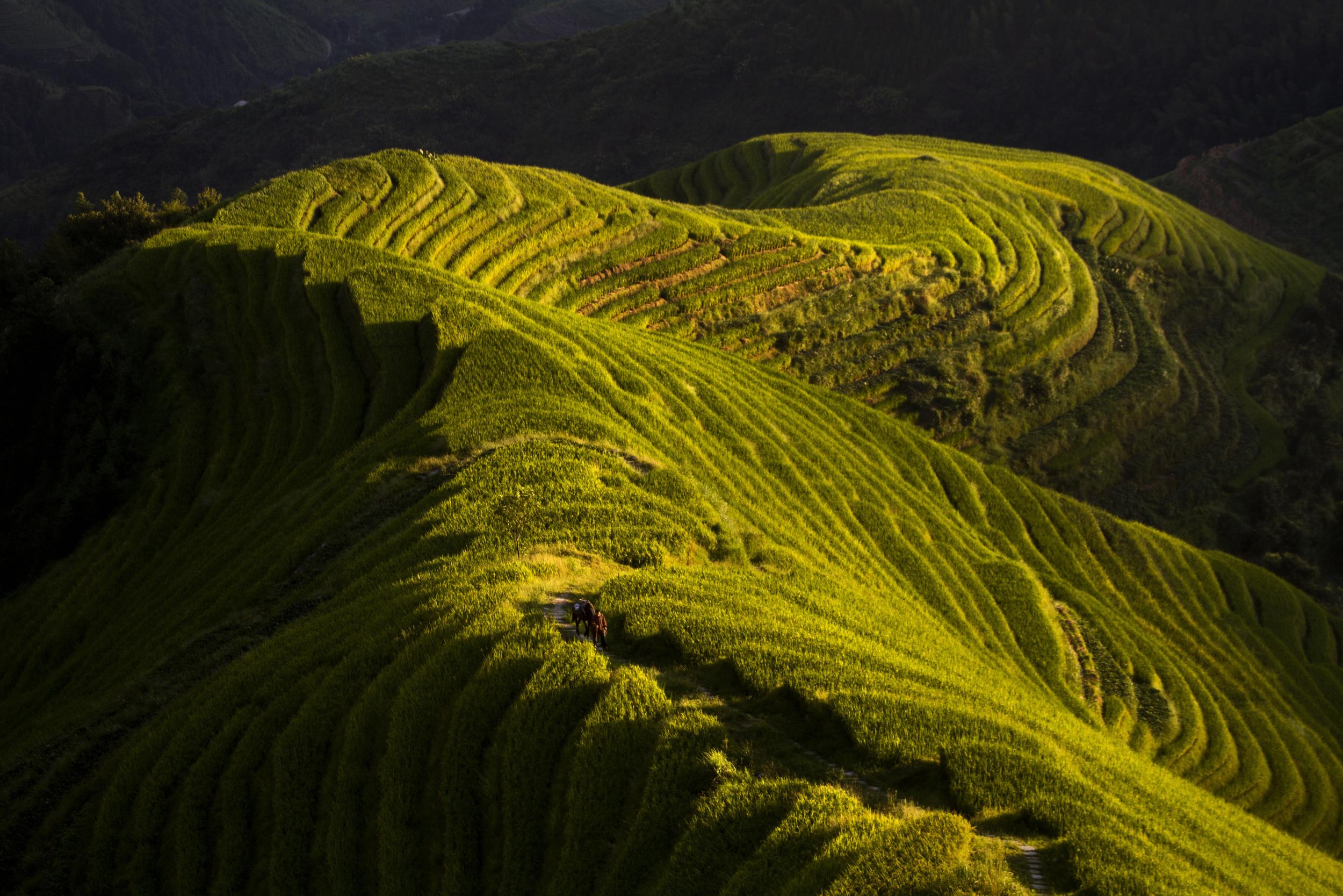 rice terrace.jpg