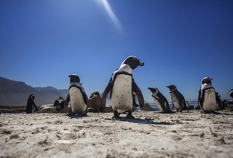 the penguins at Queensbai