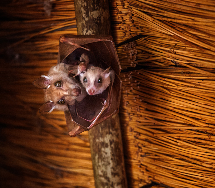 bats hanging out on the ceiling of our lodge. Who says they aren't cute!