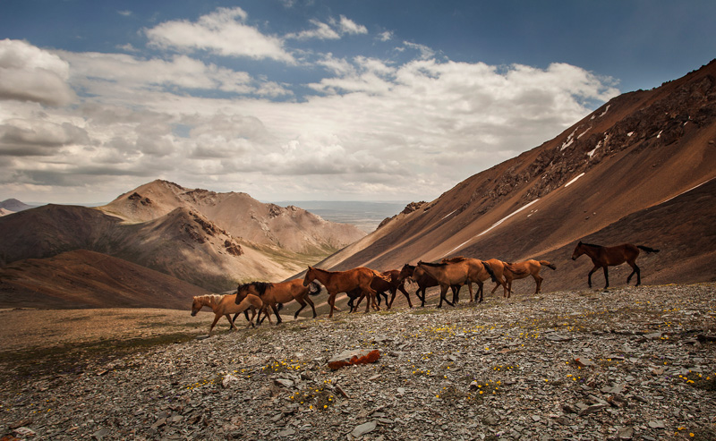 wild horses going up and over the pass