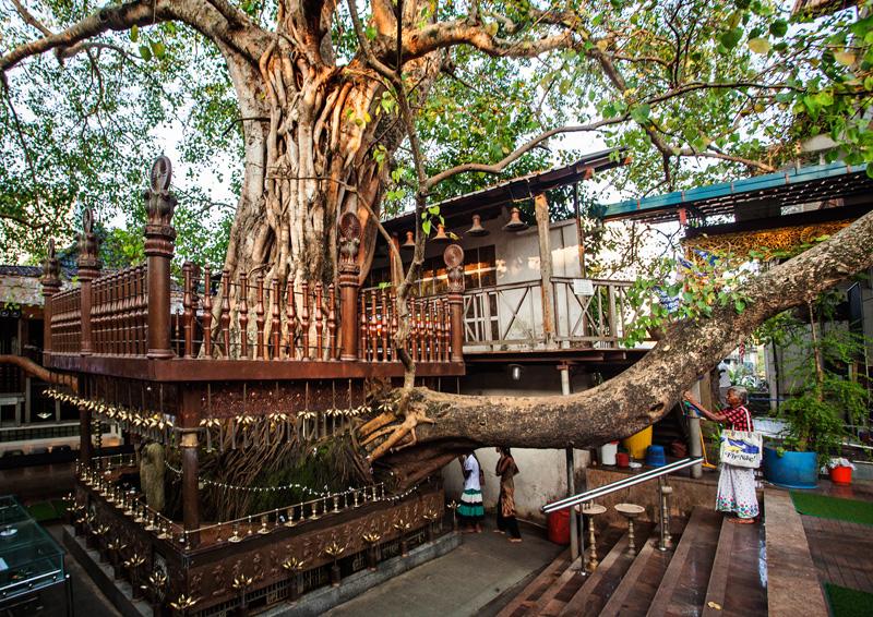 The sacred tree at the Gangaramaya Temple