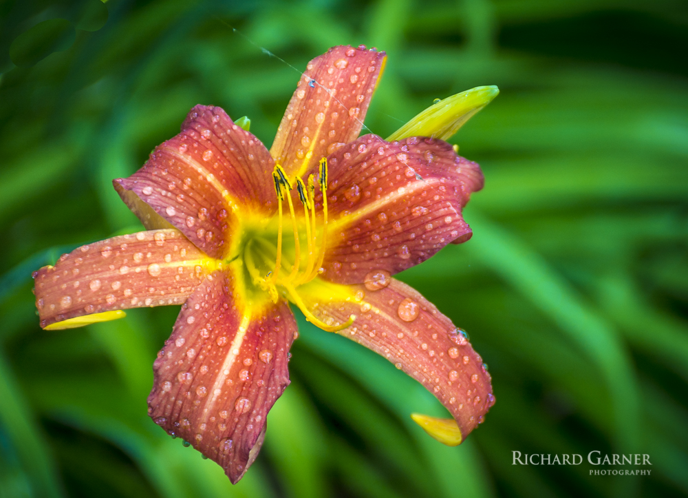 167 Lilly