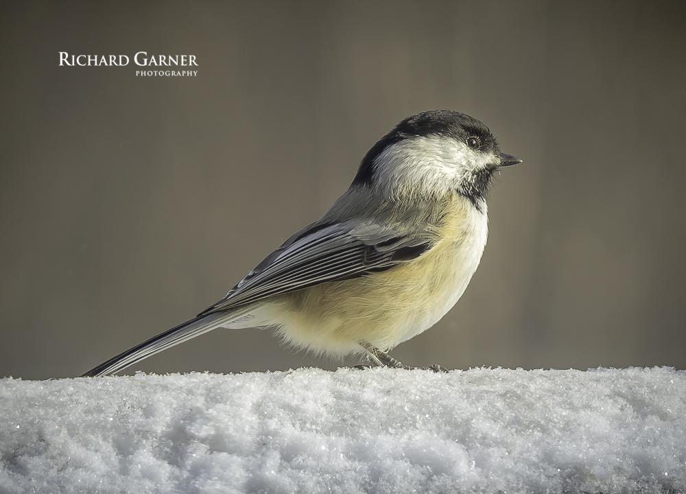 bird  FEB.15-1-150125-2089 x 1504.jpg