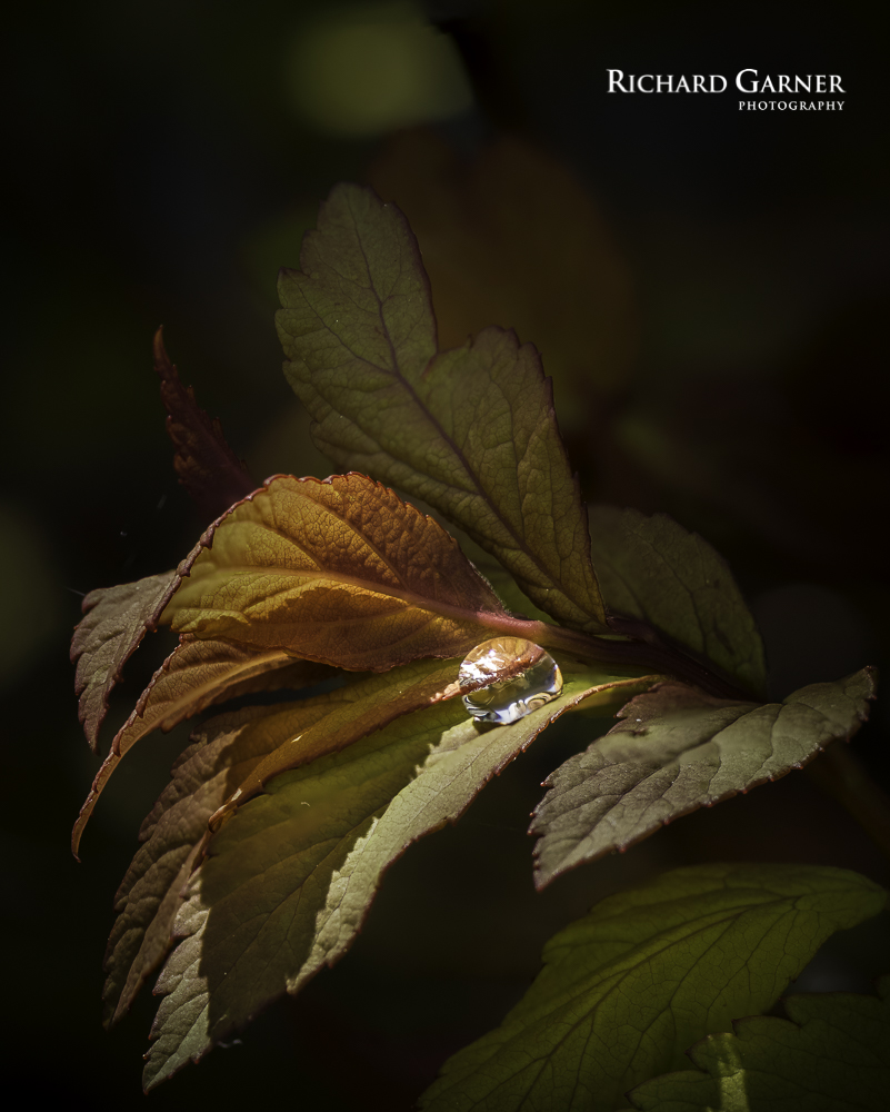 droplet on leaf-1-2.jpg