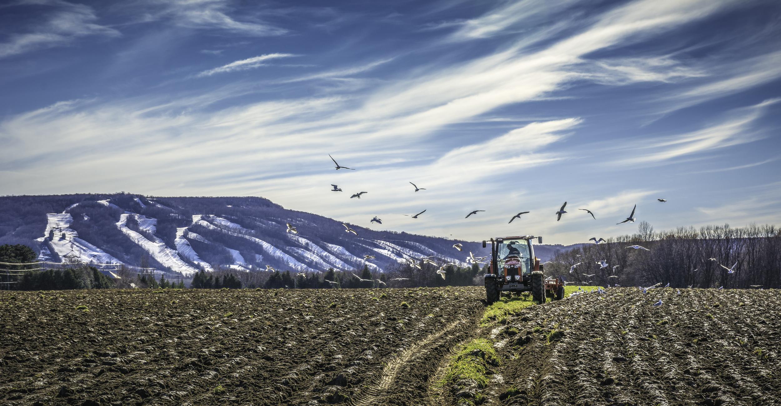 RGP-240 FARMER & SEAGULLS 15.14.04-1.jpg