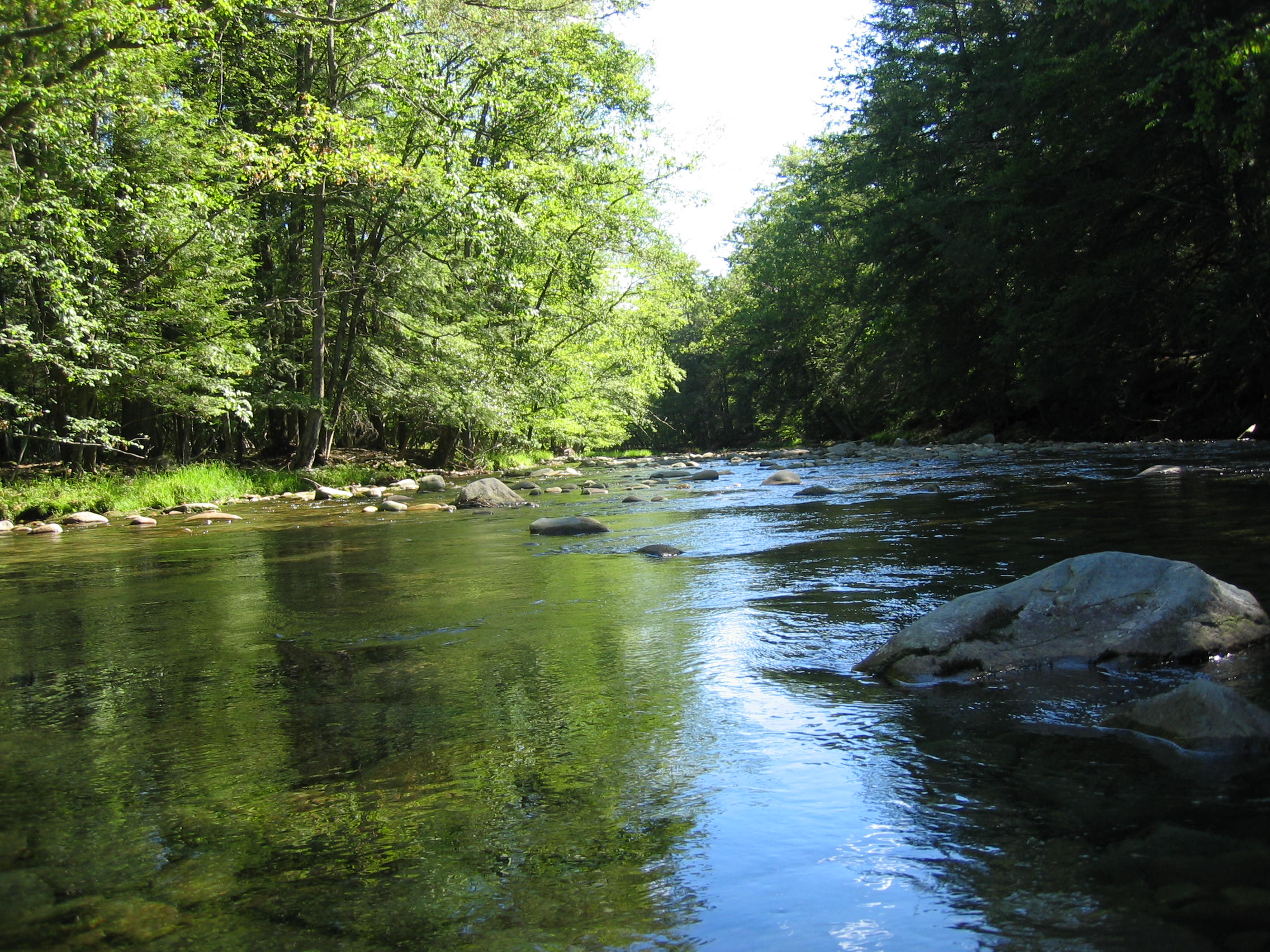 The headwaters of the Neversink River, Claryville, NY.