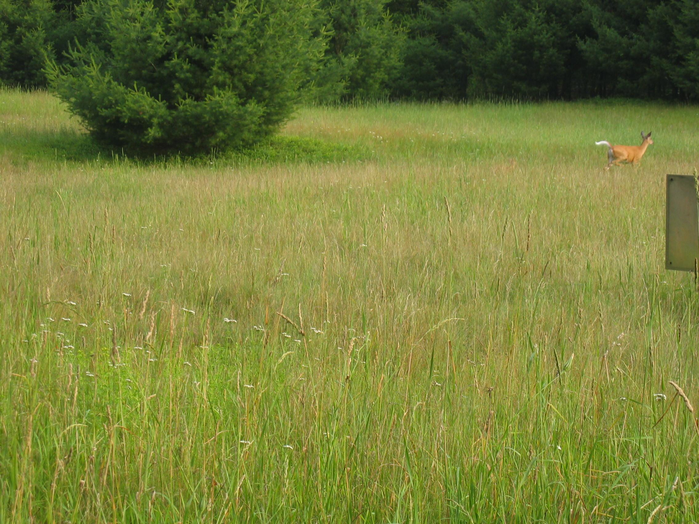 Deer on the run, Claryville