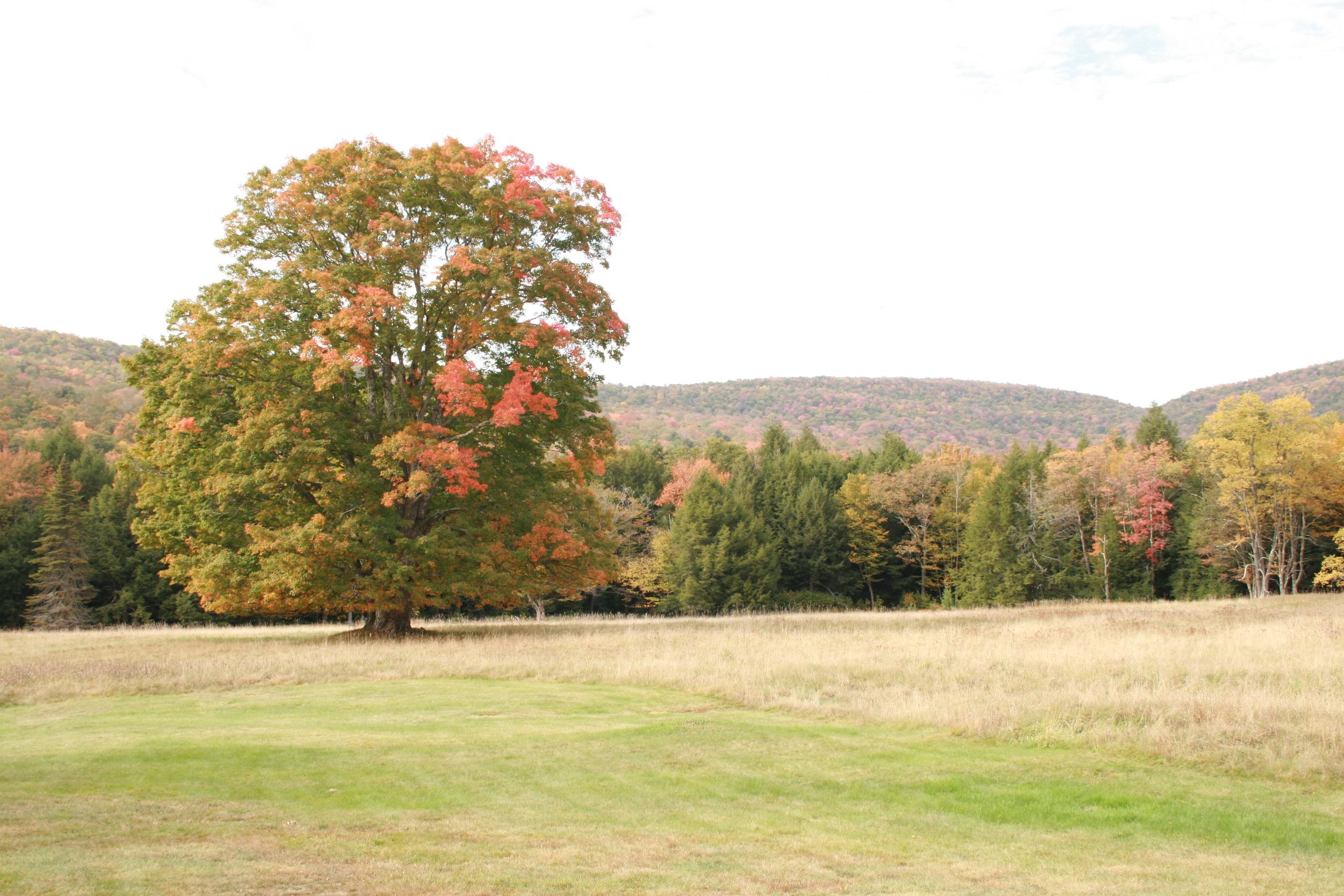 Field on Denning Rd. Claryville, NY