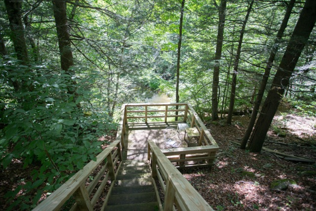 Stairs leading down through the woods to the pond area