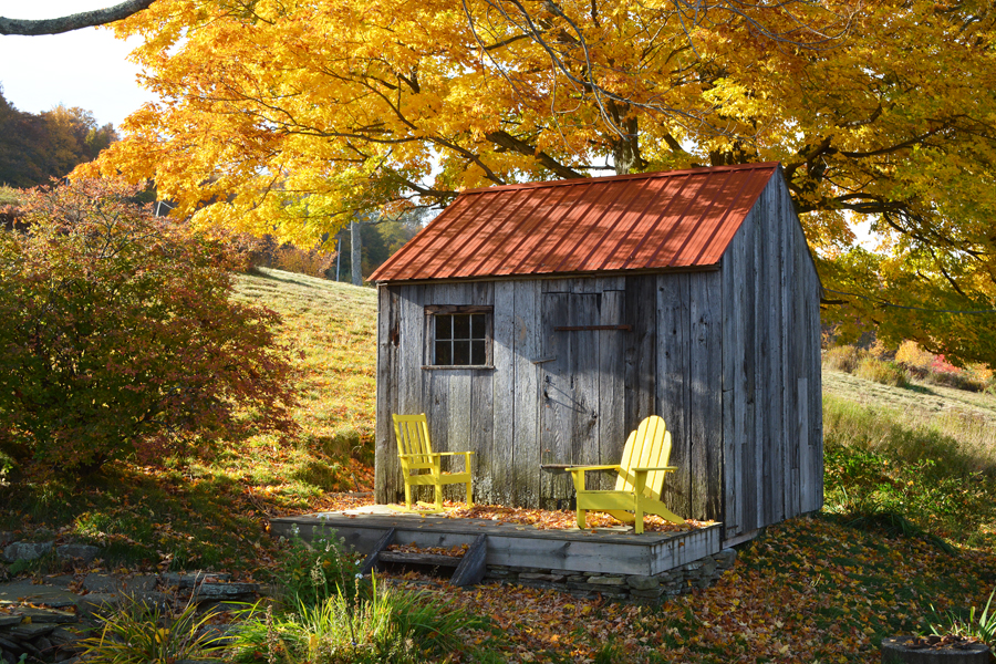 Yellow_leaves_chairs_DSC_1188.jpg