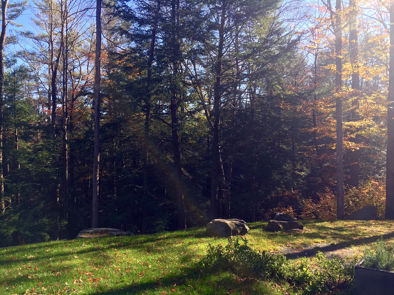 woods_drive.jpg