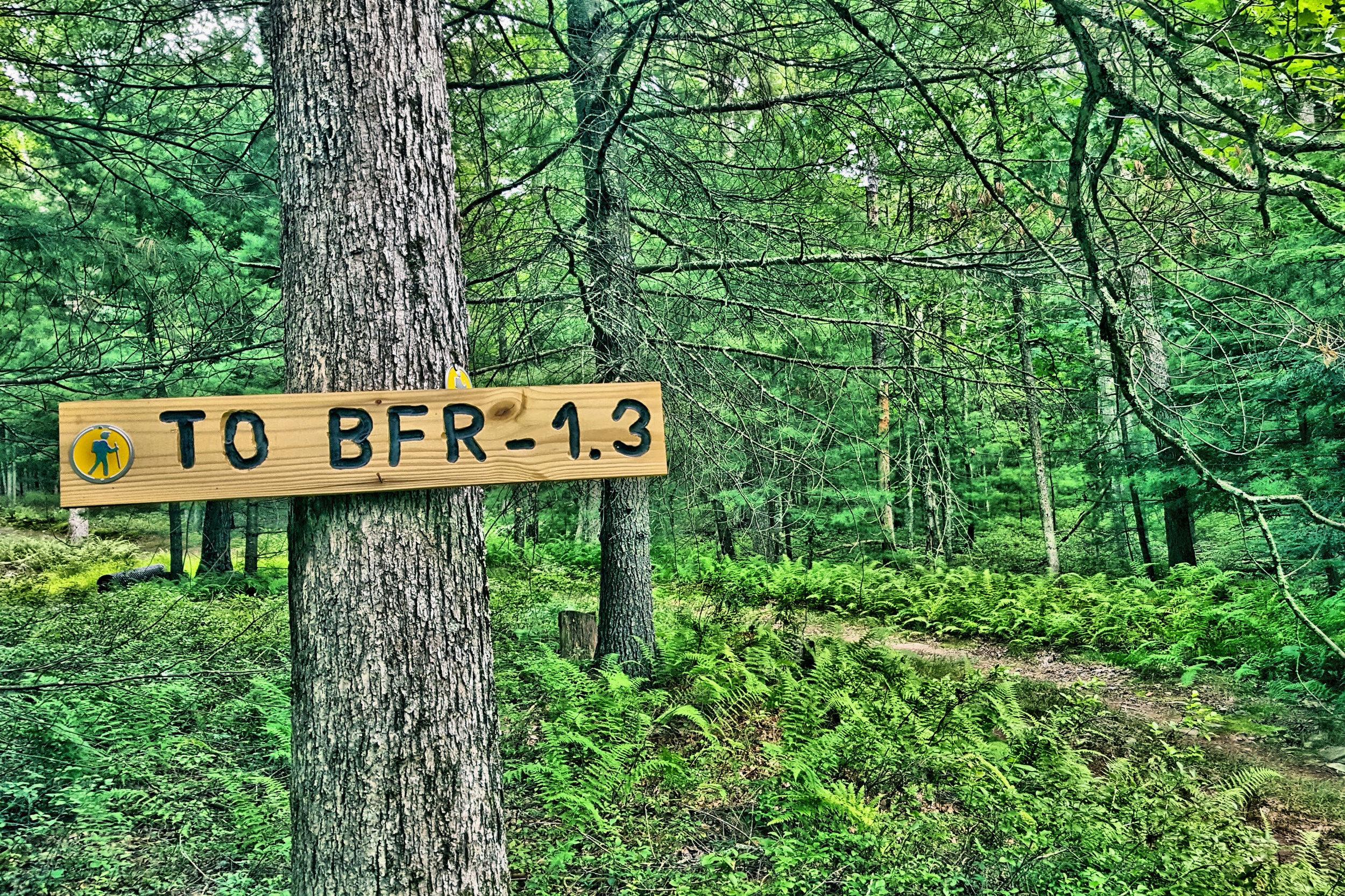 Image 28 56 Upper Lumber Yellow Trail 8 x 12.jpg