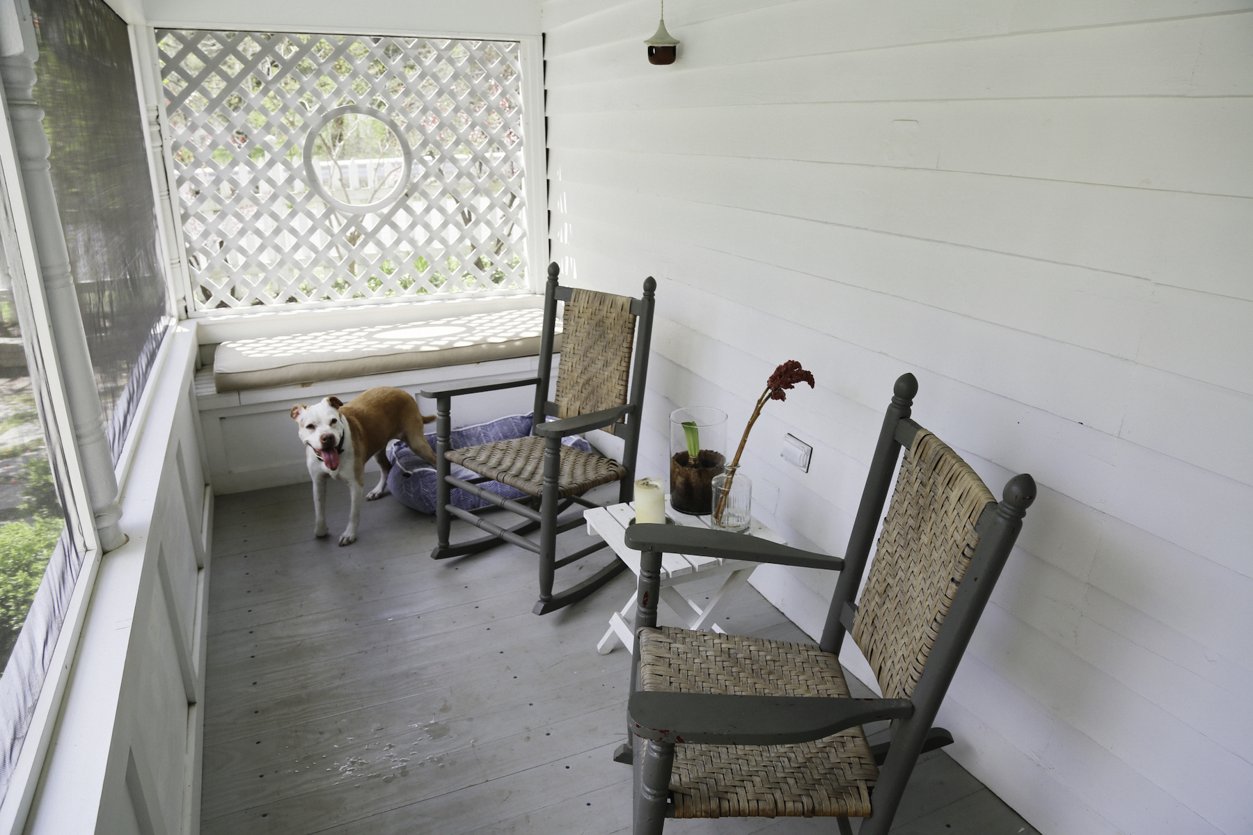 SCREENED IN PORCH HAPPY DOG_ESCAPE BROOKLYN.jpg