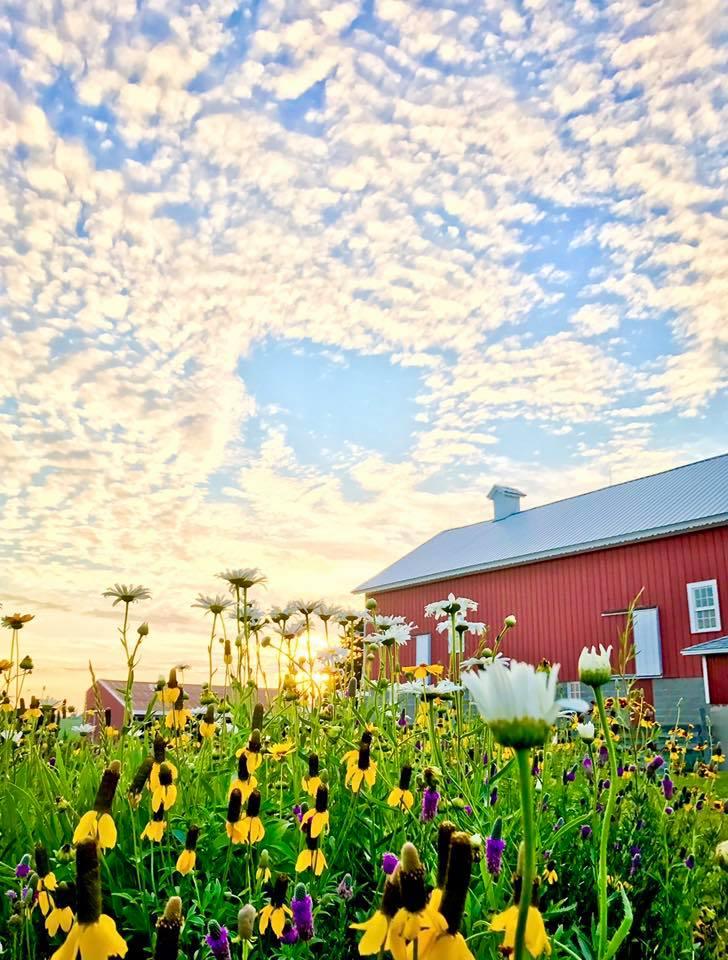 barn wildflowers.jpg