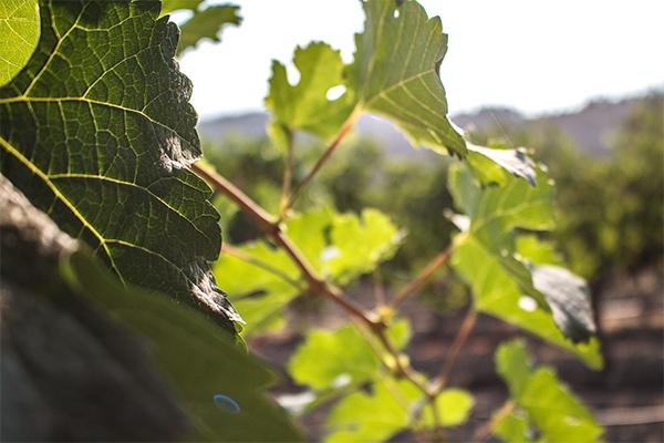 CN_website-winery_600x400_0001_IMG_5022.jpg
