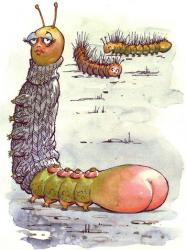 PRISCILLA   Wee Priscilla   caterpillar   feeling so contrary;   didn't mind   her fat behind   but hated being hairy.    What girl does   enjoy the fuzz   that sprouts from head to heel?   Priscilla thought   removal ought   to lift her sex appeal.    She bought a tube   of sticky goob   to rub on every day;   the label said   that if she did   the hair would go away.    She understood   that baldness would   display her figure better;   but now she's bald   she feels the cold   and has to wear a sweater.