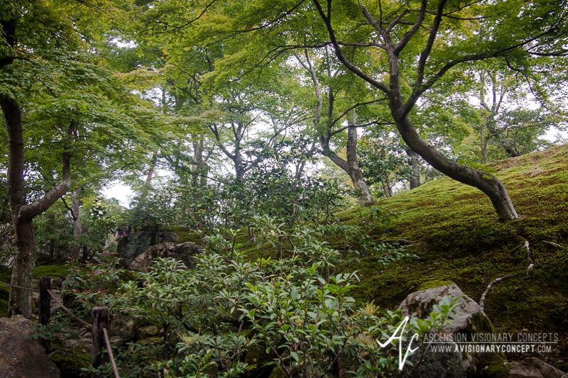 Kyoto Kinkaku-ji Golden Pavilion -  Olympus E-PL5 -  Olympus M. 14-42mm 3.5-5.6 II R MSC