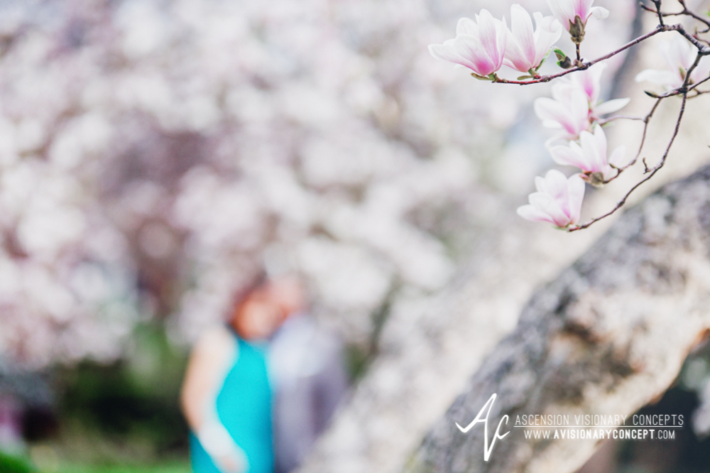 Buffalo Rochester Engagement Photography Spring Photography 003 Magnolia Trees Pink Blooms.jpg