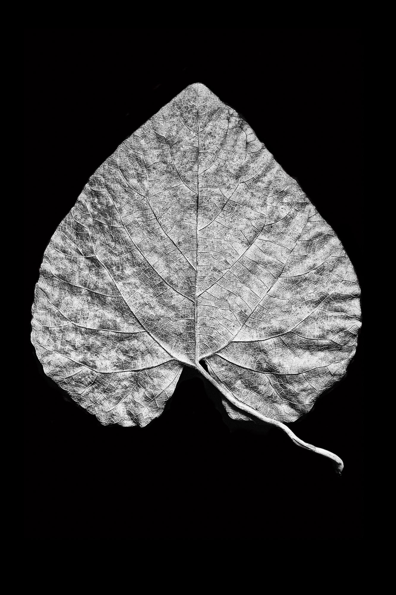 Leaf 20