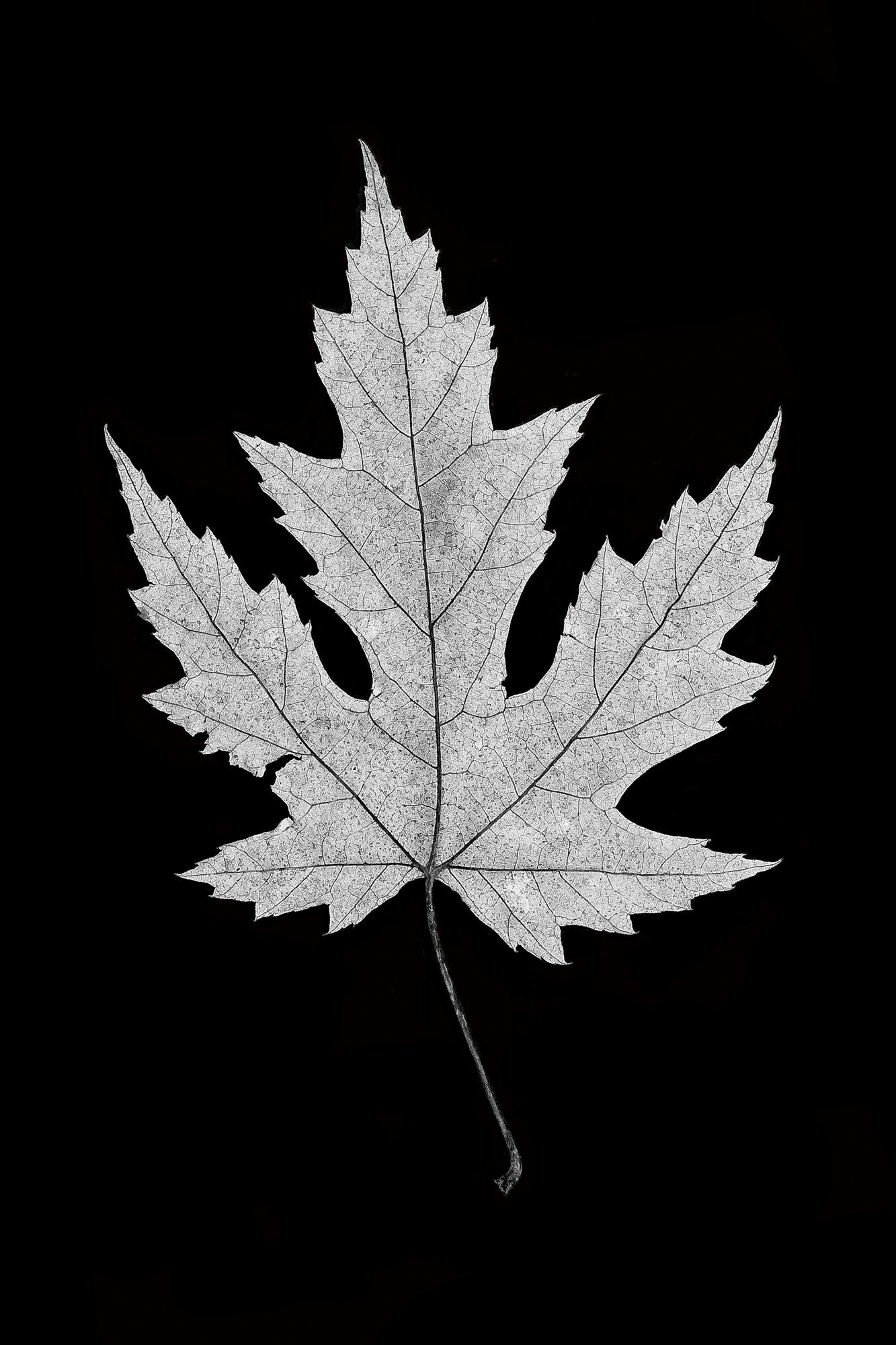 Leaf 12