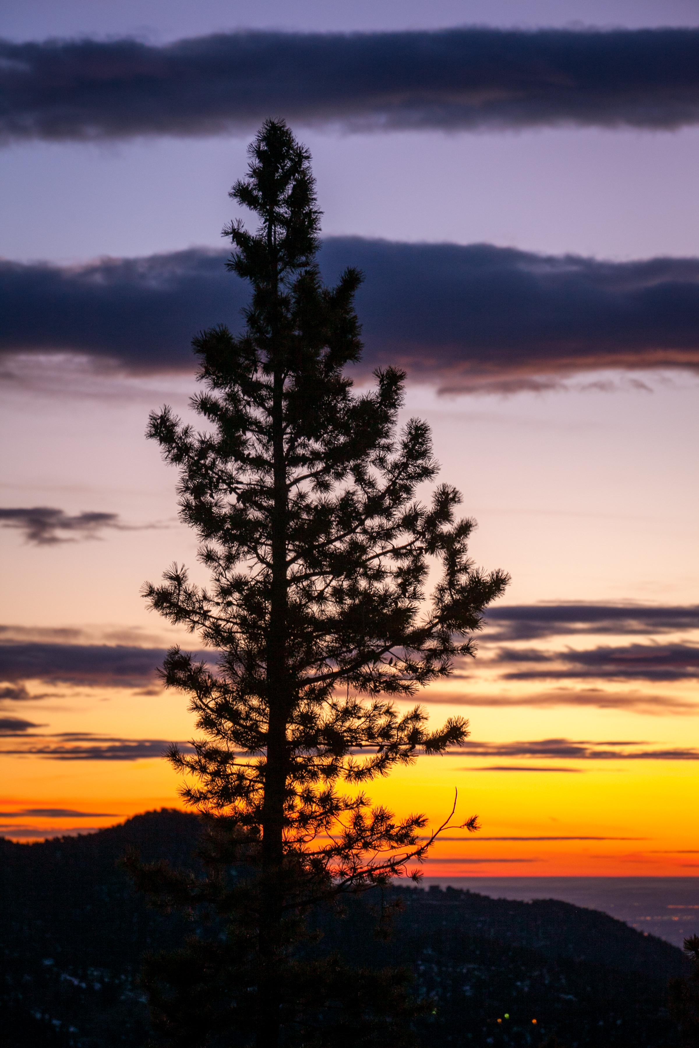 Pine tree-PERSONAL TONED-160212-001.jpg