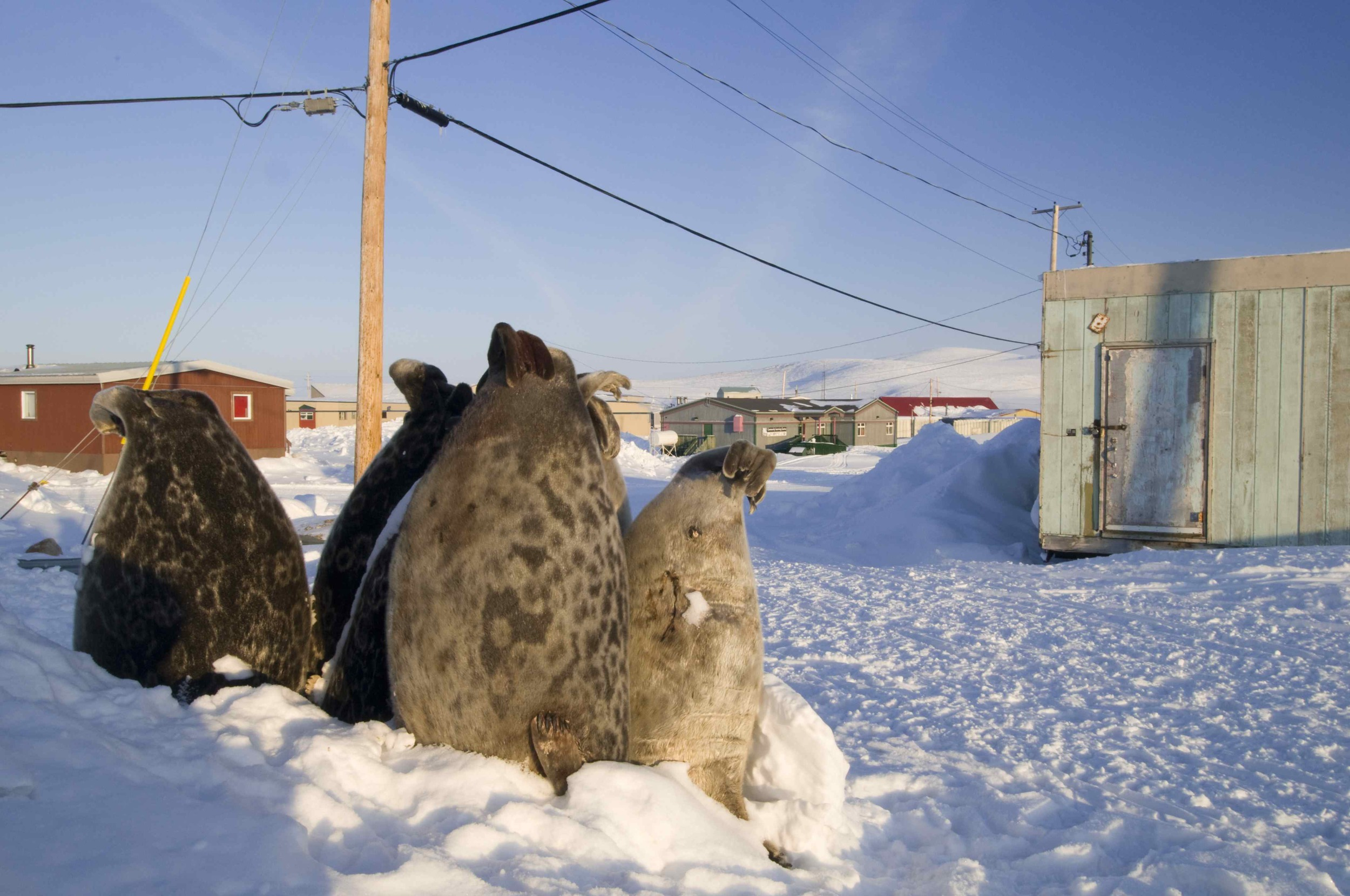 Baffin 2008-8.jpg