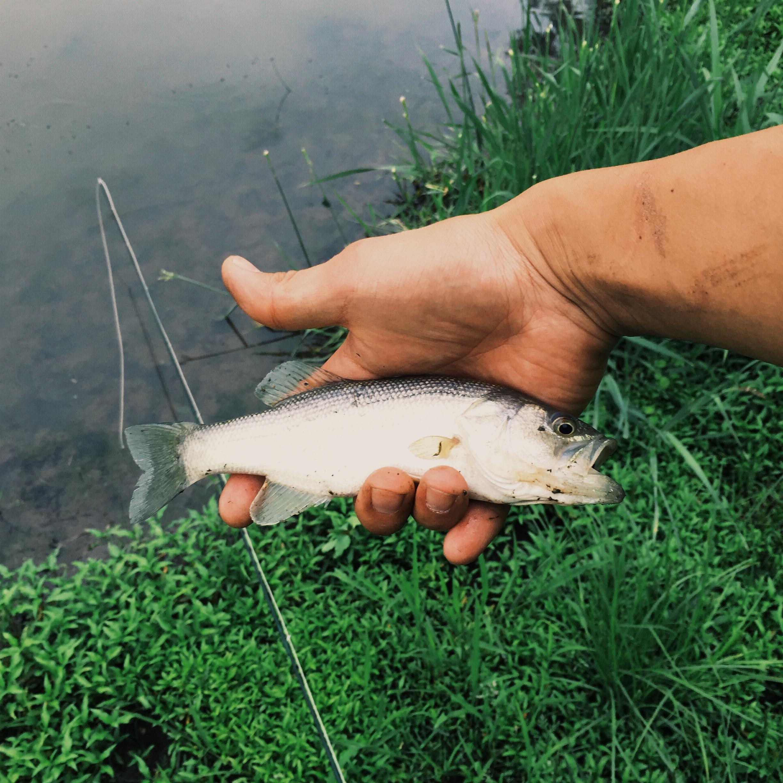 fly-fishing-farm-pond