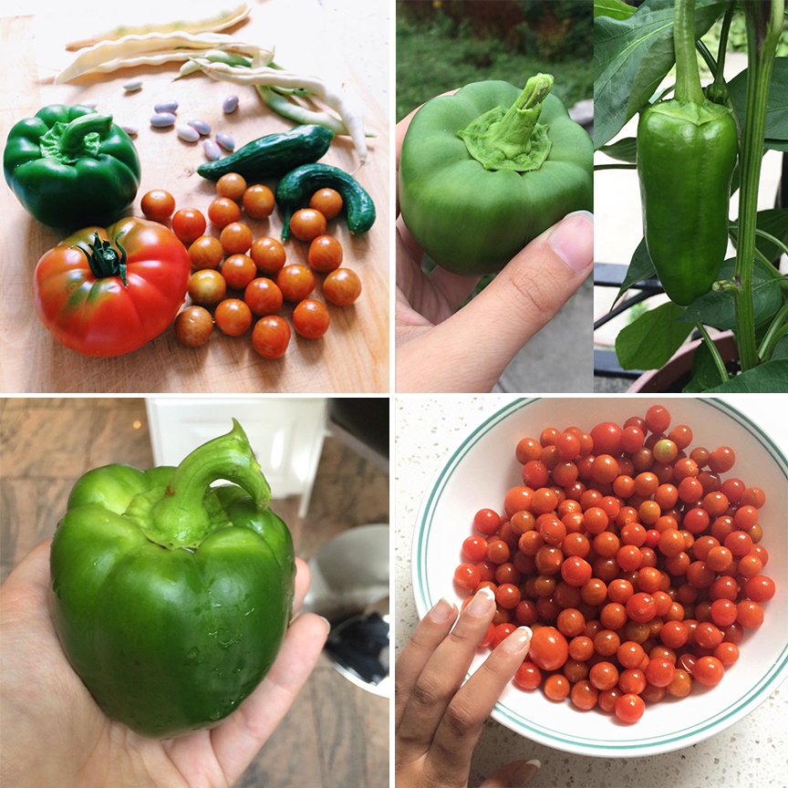 the mini harvest from my first ever garden!