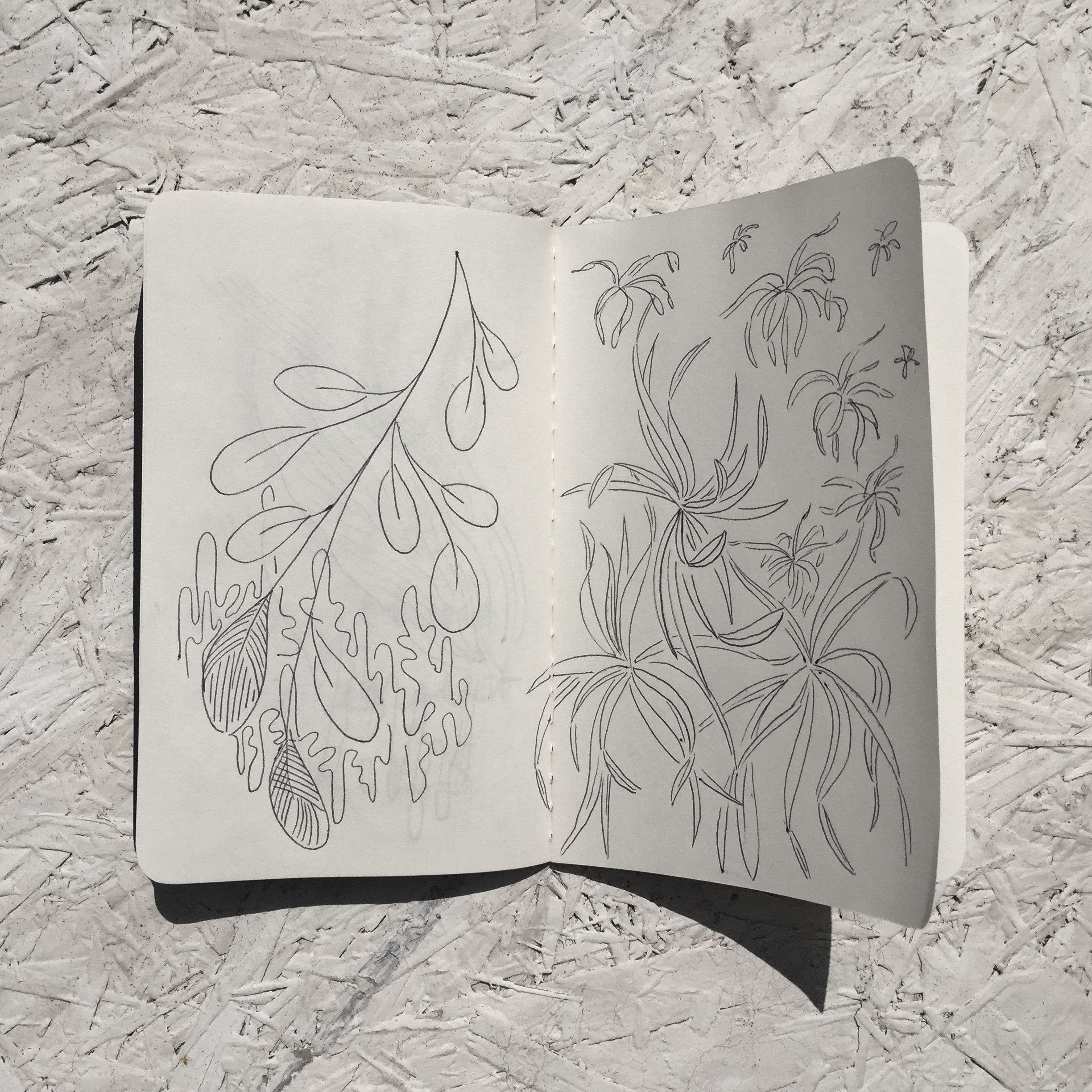 SKETCHBOOK-leaves.jpg