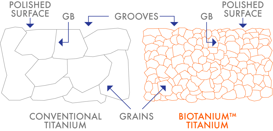 The numerous grain boundaries (GB) and associated grooves on the surface of Biotanium™ multiply the number of sites for bone cells to attach to.