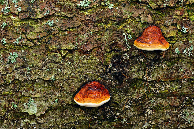 Tree Sponges