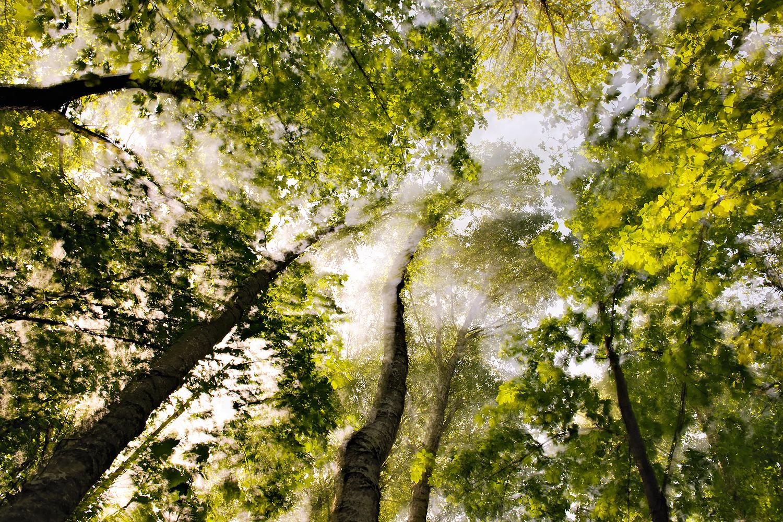 Wald im Wind