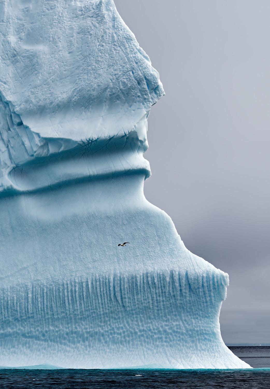 Iceberg & Seagull