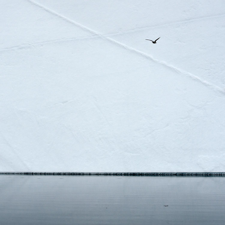 Seagull & Iceberg