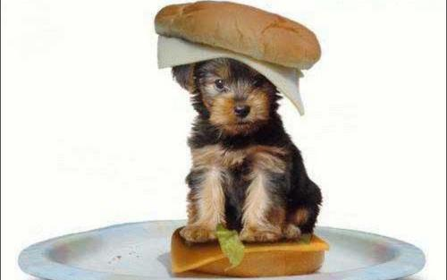 Cute-Puppy-puppies-13379771-500-313.jpg
