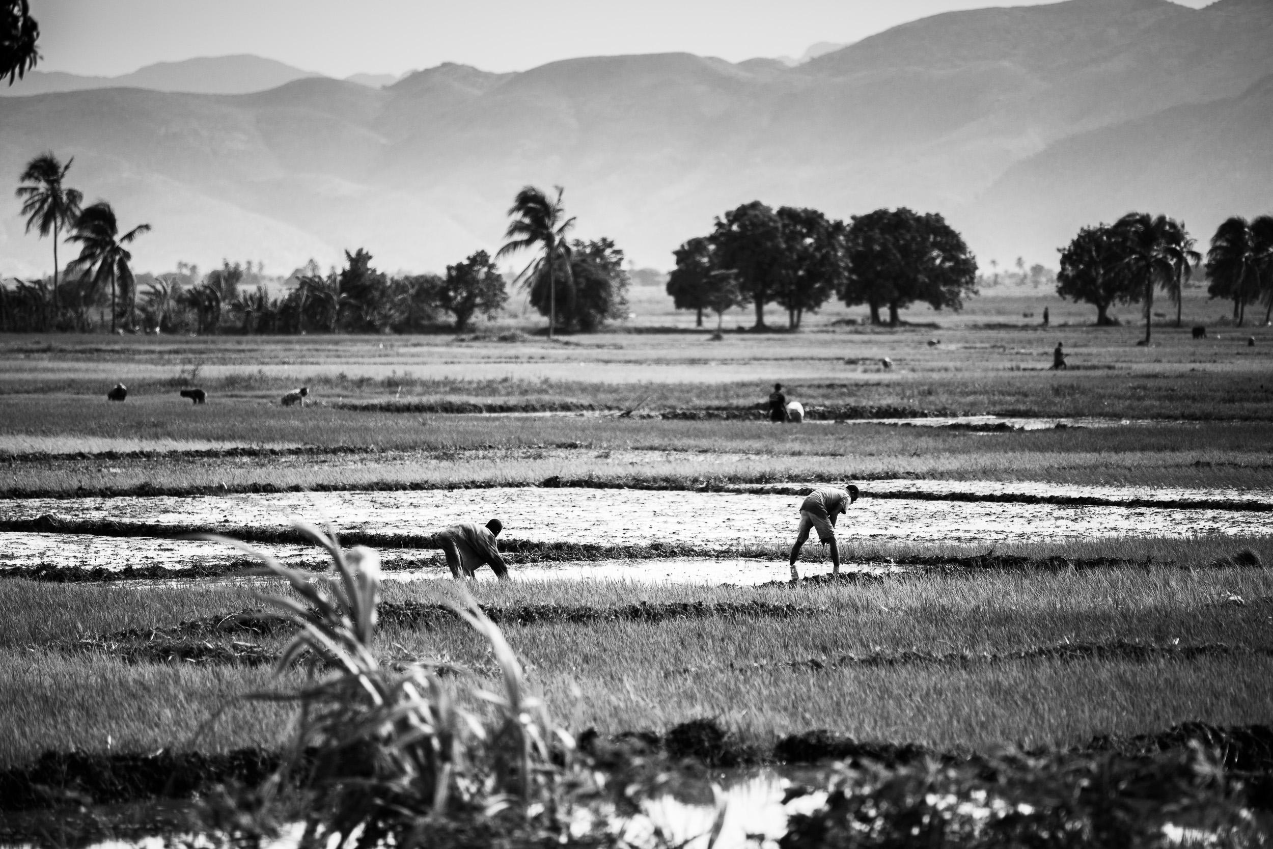 AFCORTES-haiti-3866.jpg