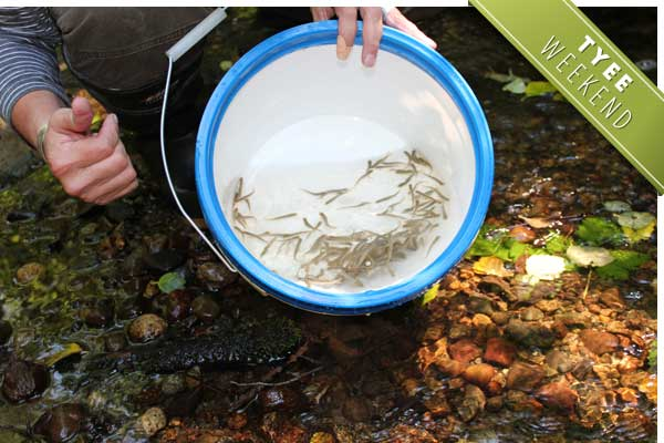 Coho fry ready to try their luck in Vancouver's restored Spanish Banks Creek. Photo by Pauline Holdsworth for the Tyee.