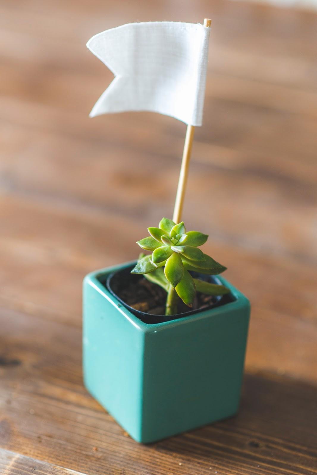 plants0024.jpg