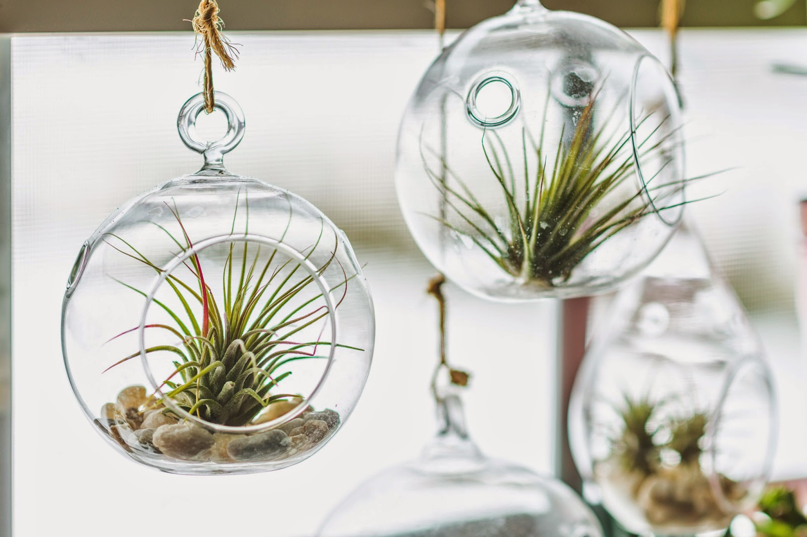plants0025.jpg