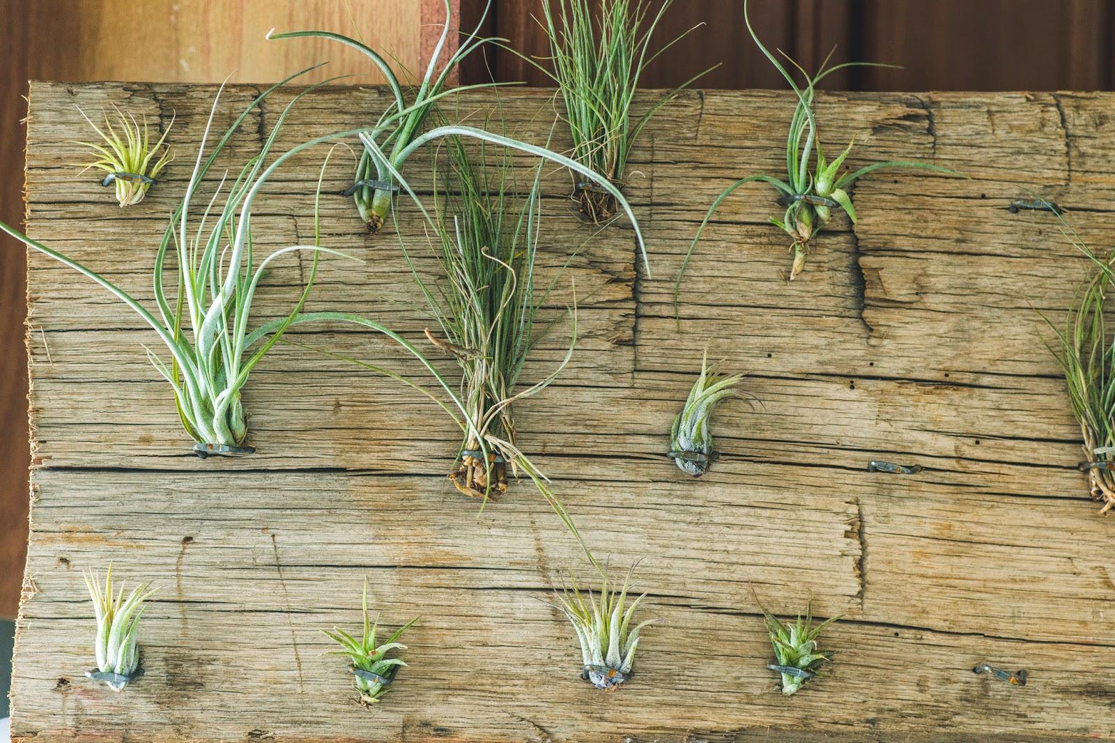 plants0027.jpg