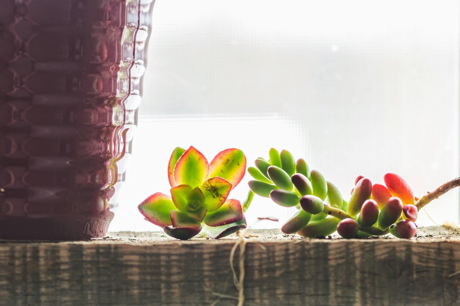 plants0032.jpg