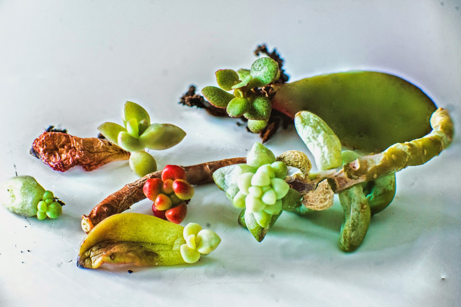 plants0037.jpg
